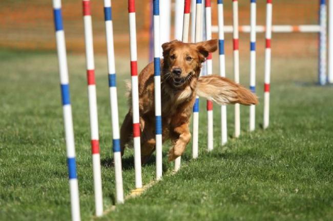 Meghívó agility versenyre
