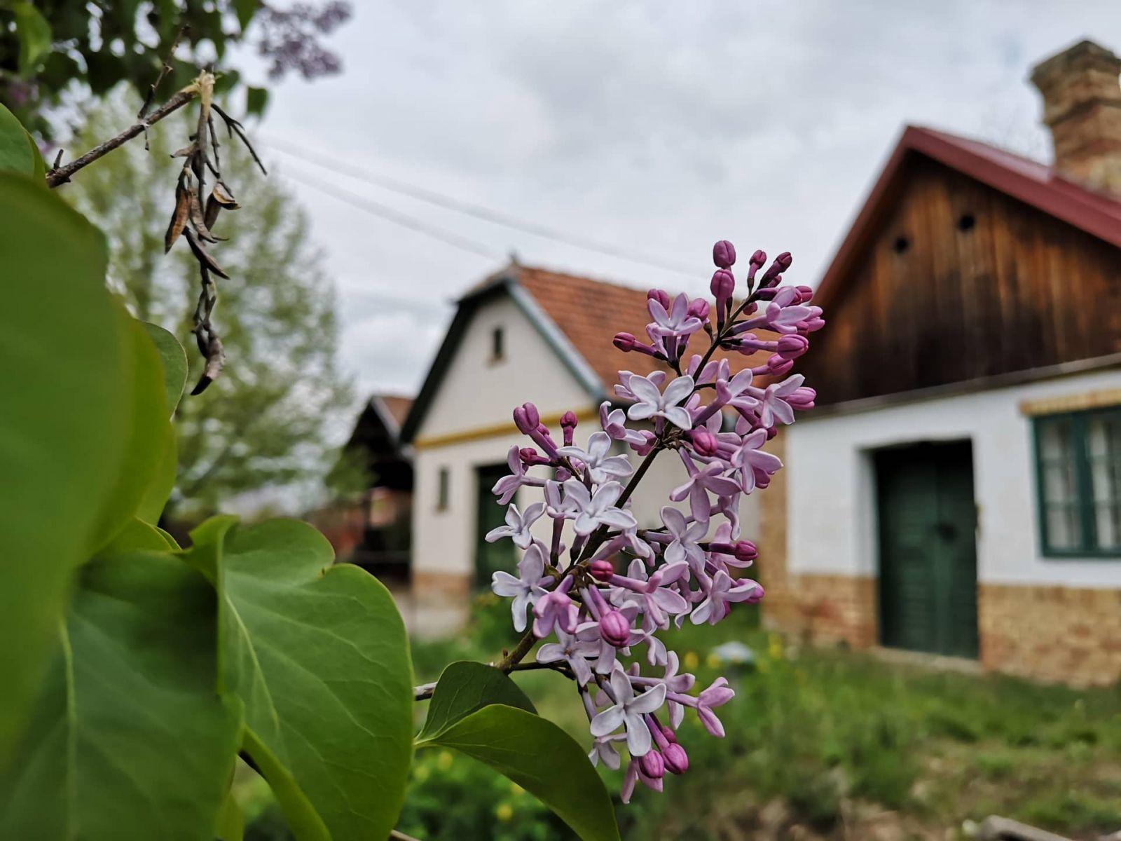 A hónap képe - Készítette: Tavasz a pincénél