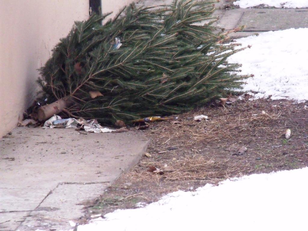 Januárban két alkalommal is elszállítják a fenyőfákat