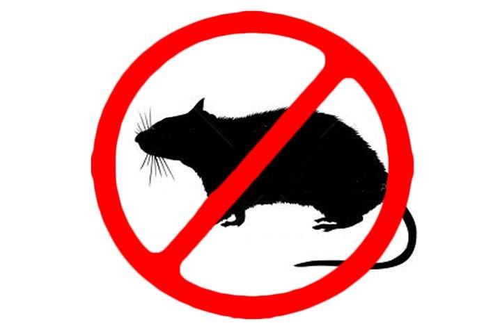 Patkányirtás 2020 ősz